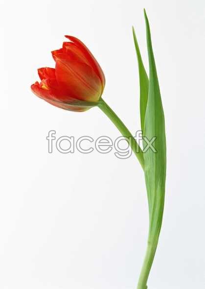 Flowers close-up 509