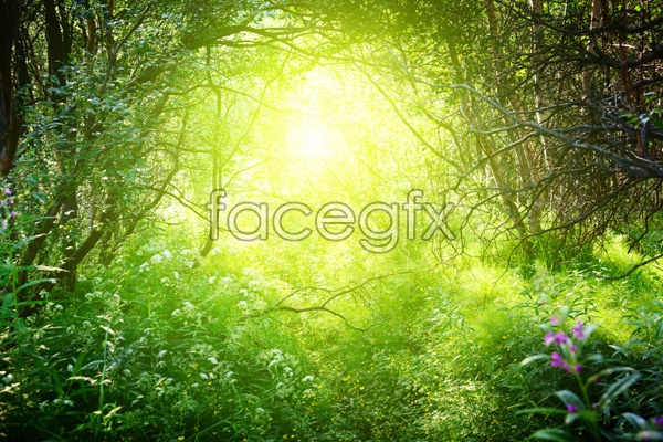 Forest landscape picture in HD