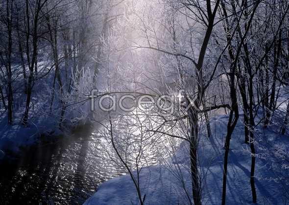 Frozen 335