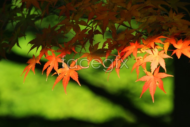 HD autumn leaves picture
