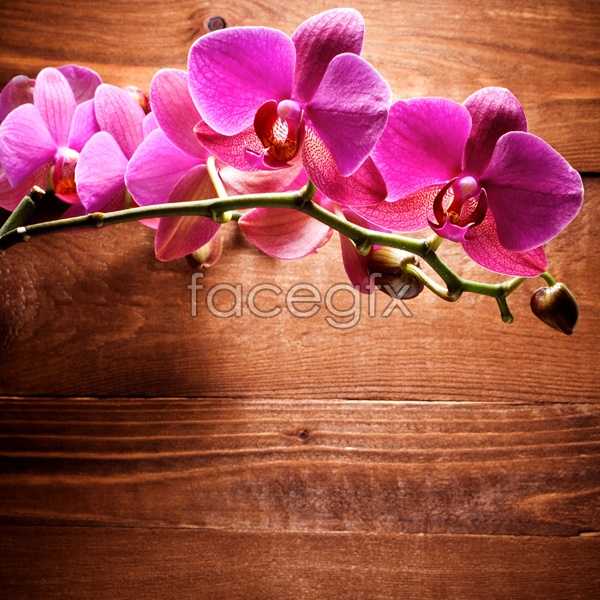 HD red Orchid pictures