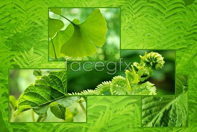 Nature background pictures of plants