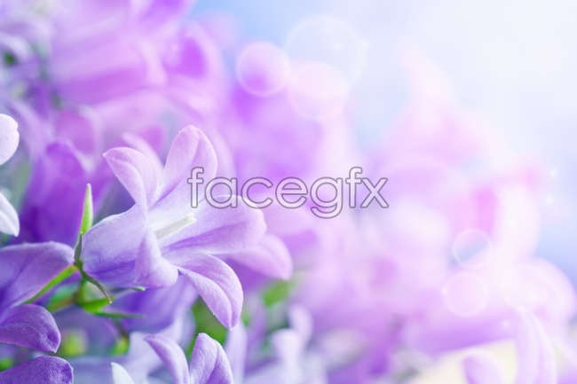 Purple flowers high resolution images
