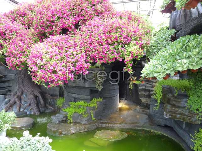 Flowers blooming footage pictures