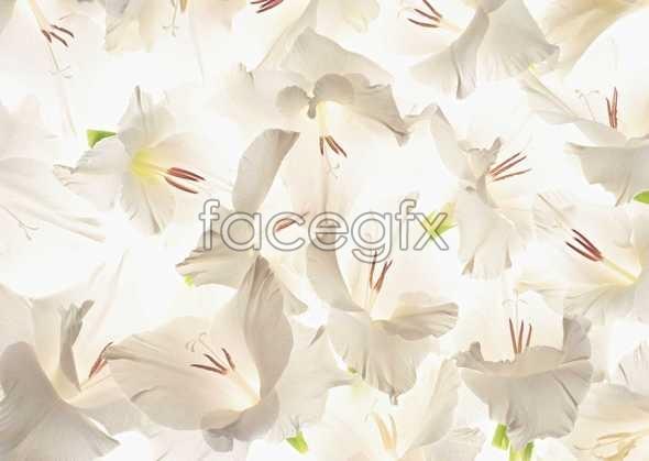 Flowers close-up 1039