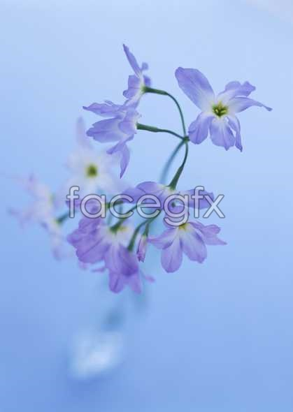 Flowers close-up 1799