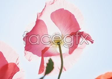 Flowers close-up 2,067
