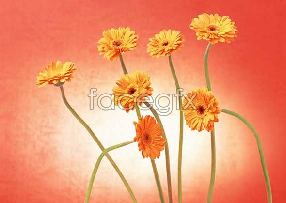 Flowers close-up 999
