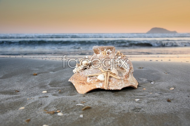 HD sea shell pictures