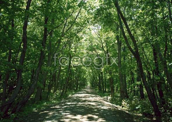 Jungle beauty of 536