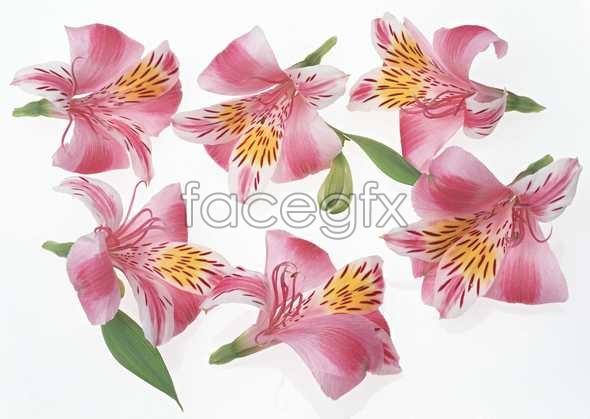 Flowers close-up 1037