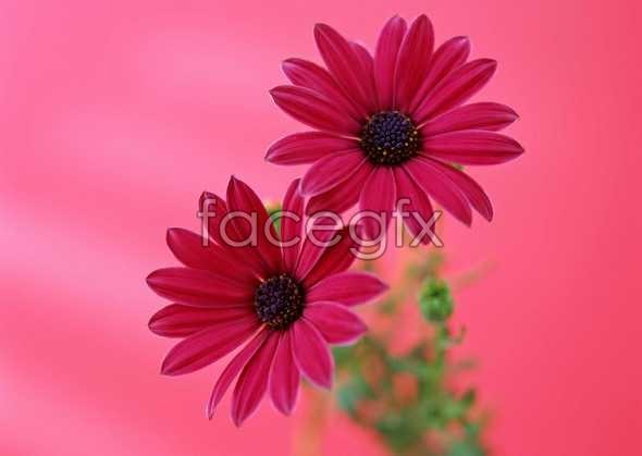 Flowers close-up 1372