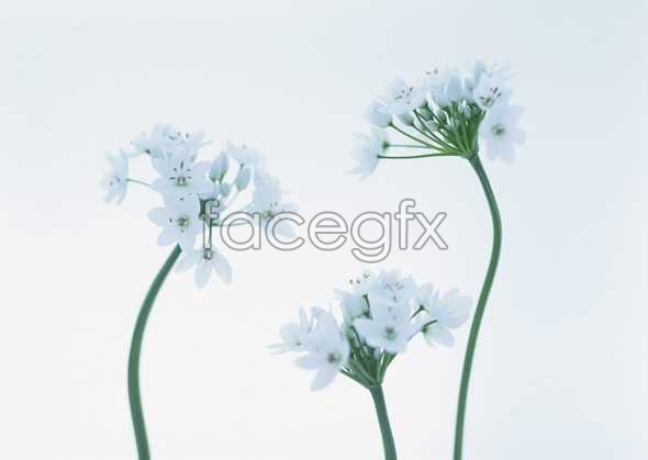 Flowers close-up 1730