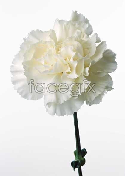 Flowers close-up 530