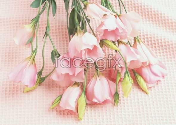Flowers close-up 908
