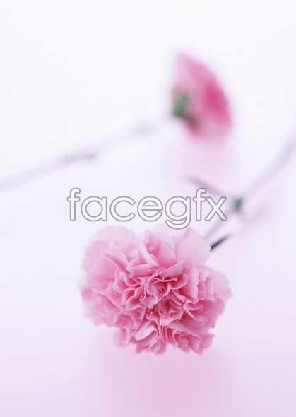 Flowers close-ups 1717