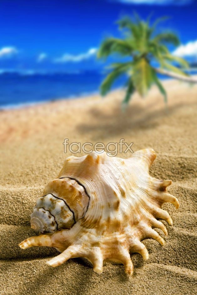 HD Beach conch pictures