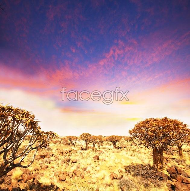 HD wilderness landscape picture