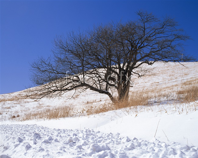 Japan snow picture material