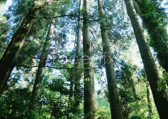 Jungle beauty of 126