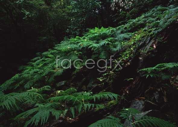 Jungle beauty of 283