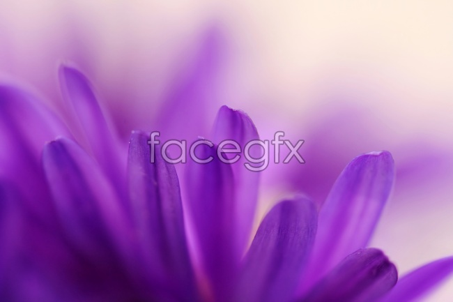 Purple flowers picture material