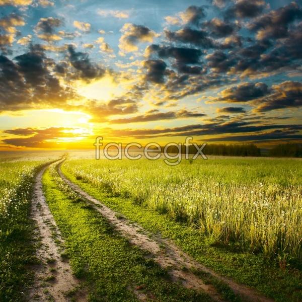 Field sky scenery picture