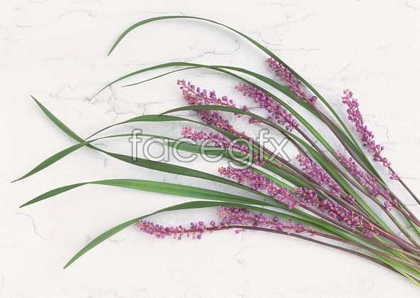 Flowers close-up 1018