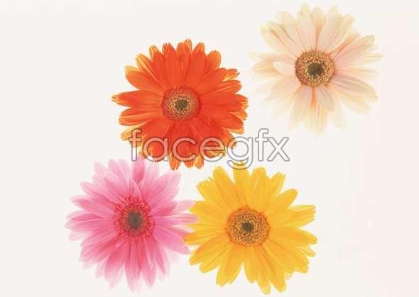 Flowers close-up 149