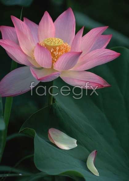 Flowers close-up 1601