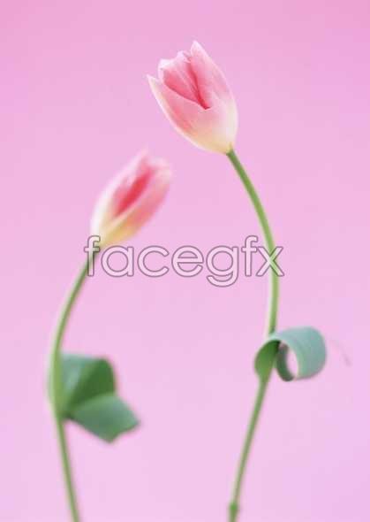 Flowers close-up 1694