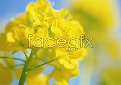 Flowers close-up 2,098