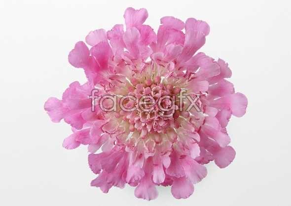 Flowers close-up 431