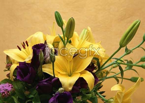 Flowers close-up 922