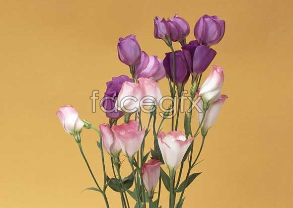 Flowers close-up 940