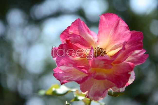 HD beautiful flower pictures