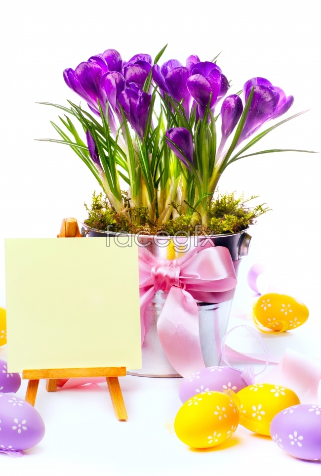 Potted Purple Orchid pictures