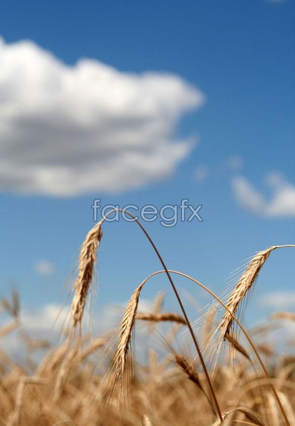 Wild grass picture