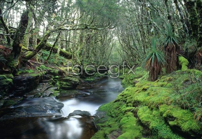 Beautiful forest streams pictures