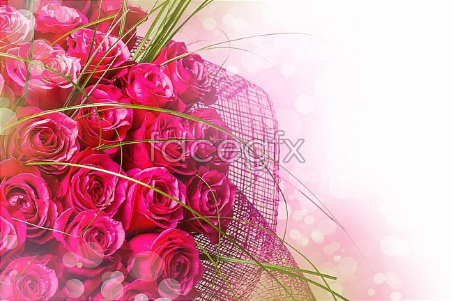Fantasy red rose pictures