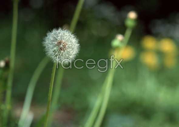 Flowers close-up 1183