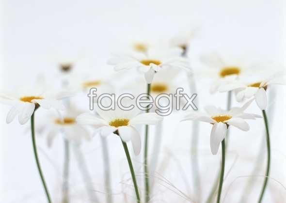 Flowers close-up 1806