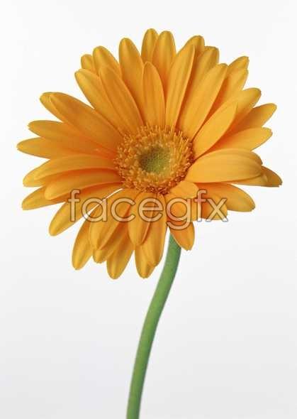 Flowers close-up 522