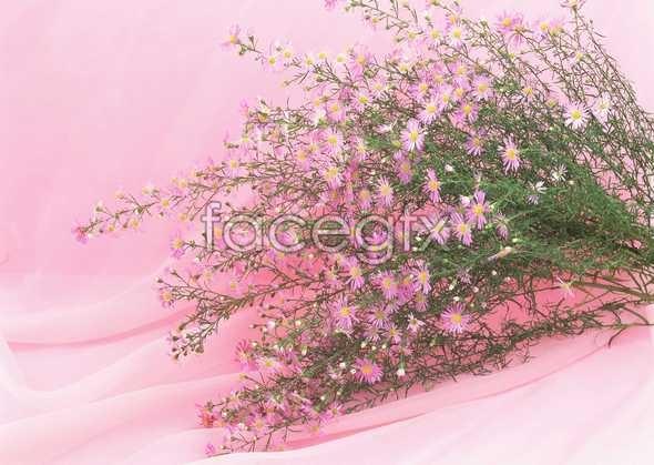 Flowers close-up 906