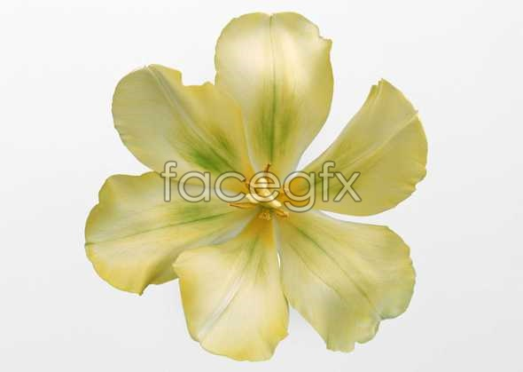 Flowers close-ups of 414