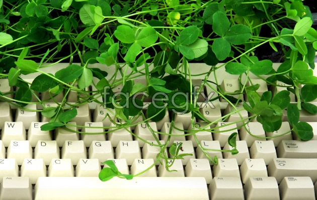 Four-leaf clover high definition pictures
