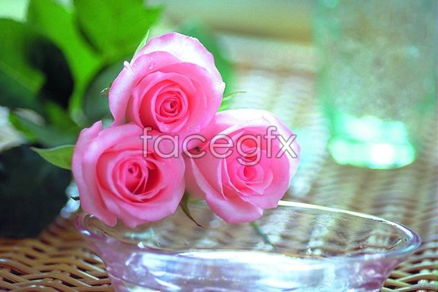 HD Red Roses pictures
