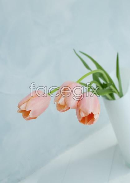 Indoor flower 79
