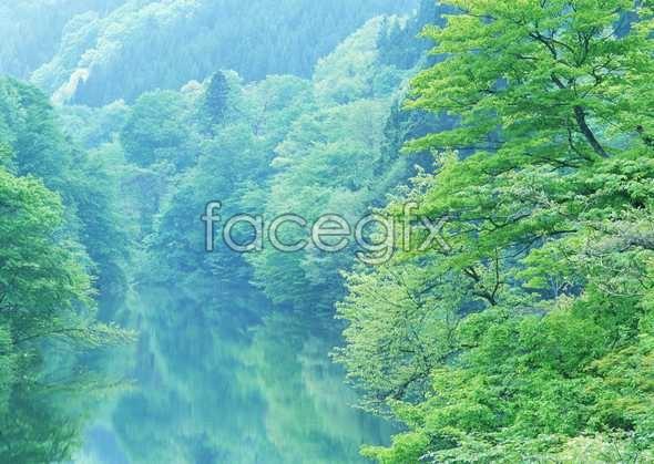 Jungle beauty of 196
