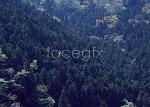 Jungle beauty of 491
